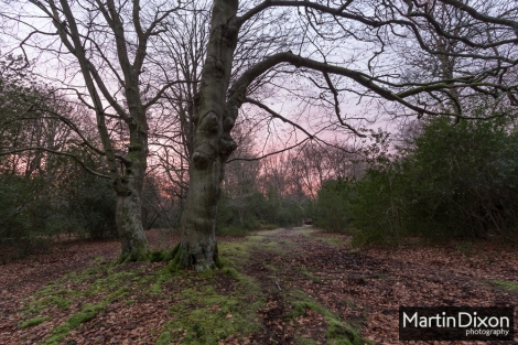 Dawn in Busketts Wood