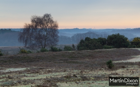 January New Forest morning