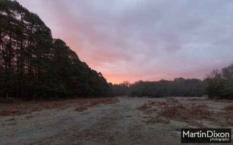 Red sky of a New Forest morning