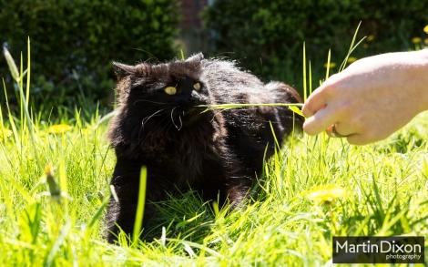 Cat vs. Grass